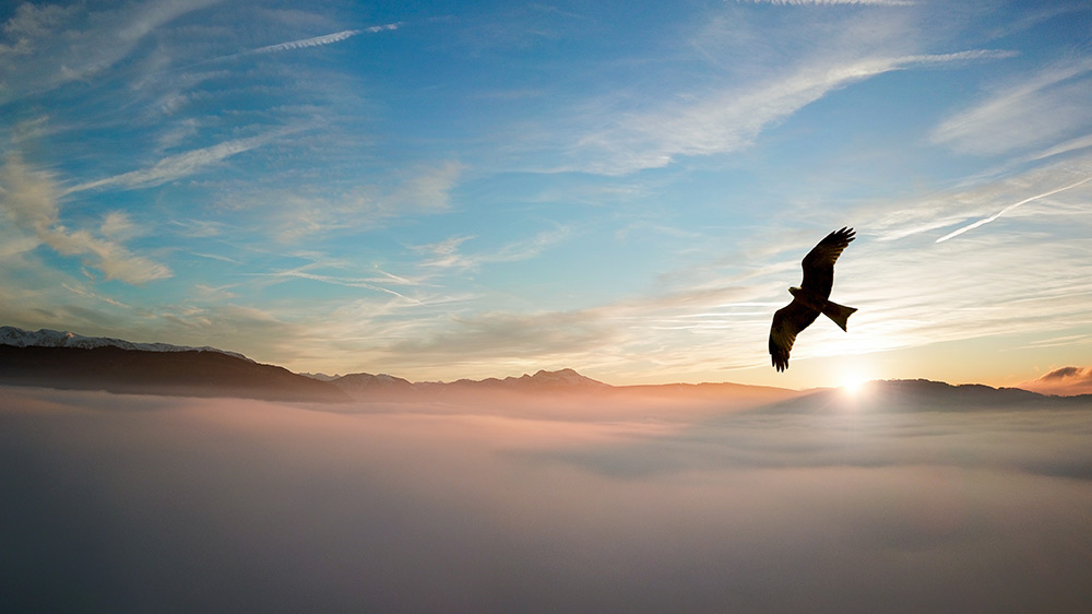 silhouette-of-bird-above-clouds